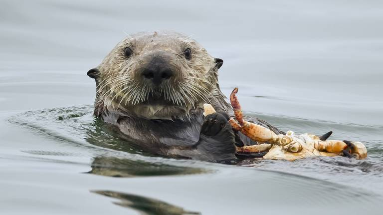 Gallery with otters for 2020-5